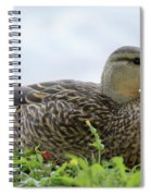Florida Mallard Spiral Notebook