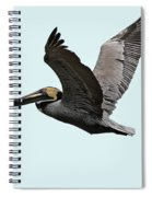 Florida Pelican In Flight Spiral Notebook