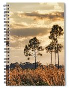 Florida Pine Landscape By H H Photography Of Florida Spiral Notebook