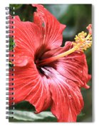 Florida Red Spiral Notebook