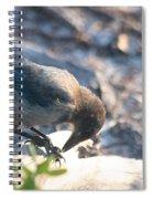 Florida Scrub Jay Breakfast Time Spiral Notebook
