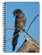 Florida Scrub Jay Pondering Life's Choices Spiral Notebook