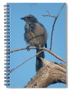 Florida Scrub Jay Watching The Lay Of The Scrub Spiral Notebook