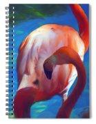 Florida's Flamingo's Spiral Notebook
