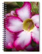 Flower 12 Pink White Yellow Spiral Notebook