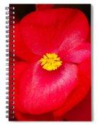 Flower 8 Spiral Notebook