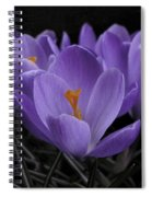 Flower Crocus Spiral Notebook