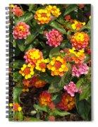 Flower Explosion Spiral Notebook