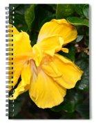 Hibiscus Flower Spiral Notebook