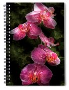 Flower - Orchid - Phalaenopsis - The Cluster Spiral Notebook