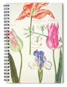 Flower Studies  Tulips And Blue Iris  Spiral Notebook