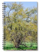 Flowering Huisache Tree  Spiral Notebook