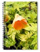 Flowering Maple Spiral Notebook