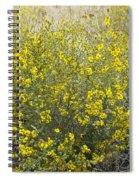 Flowering Tarweed Spiral Notebook