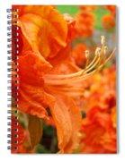 Flowers Azalea Garden Orange Azalea Flowers 1 Giclee Prints Baslee Troutman Spiral Notebook