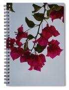 Flowers In The Sky Spiral Notebook