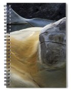Flowing Rock 3 Spiral Notebook