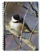 Fluffy Chickadee Spiral Notebook