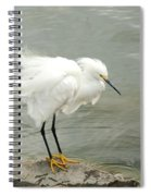 Fluffy Snowy Egret Spiral Notebook