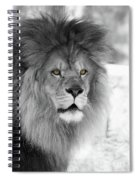 Fluffy Tango  Black And White  T O C Spiral Notebook
