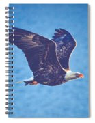 Fly By Eagle. 3 Of 3 Spiral Notebook