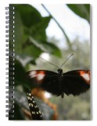 Fly Free - Black, Orange, White Butterfly Spiral Notebook