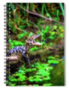 Fly Into My Mouth Please Spiral Notebook