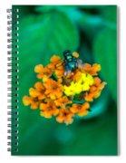 Fly On Flower Spiral Notebook