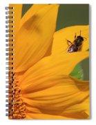 Fly On Sunflower Spiral Notebook