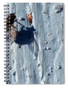 Fly On The Wall Spiral Notebook