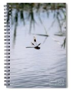 Flying Dragonfly Over Pond With Reeds Spiral Notebook