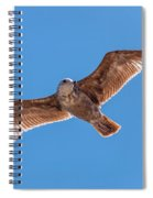 Flying Gull Spiral Notebook