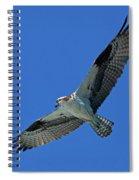 Flying Osprey Spiral Notebook