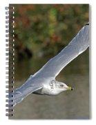Flying Sea Gull - Eugene Oregon Spiral Notebook