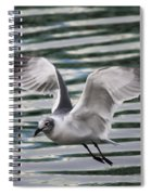 Flying Seagull Spiral Notebook