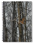 Flying Through The Trees Of The Forest Spiral Notebook
