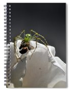 Flys At The Picnic Spiral Notebook