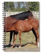 Foal Feeding With Milk Ranch Scene Spiral Notebook