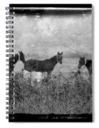 Horse Trio In Morning Fog Spiral Notebook