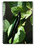 Folded Up - Green And Black Butterfly Spiral Notebook