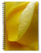 Folds Of A Rose Spiral Notebook