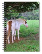 Follow Me Spiral Notebook