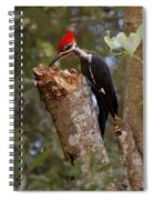 Foraging Pileated Woodpecker Spiral Notebook