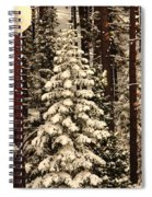 Forest Christmas Tree Spiral Notebook