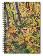 Forest Colors Spiral Notebook