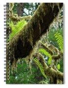 Forest Ferns Art Prints Fern Giclee Prints Baslee Troutman Spiral Notebook