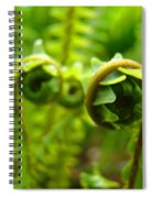 Forest Ferns Fine Art Photography Art Prints Baslee Troutman Spiral Notebook