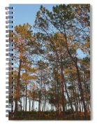 Forest Pine Trees At Sunset Spiral Notebook