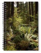 Forest Sunlight And Shadows  Spiral Notebook