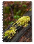 Forest Woods Spiral Notebook
